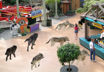 Timber Wolf Mistakenly Reintroduced Into Mall Of America