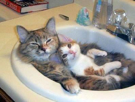 Awwe, They're So Cute Until You Turn on the Water, Retinas grow back, right?