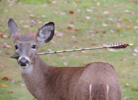 After Latest Deer Attack Daryl Wanted for Questioning, And Steve Martin is suing for plagiarism