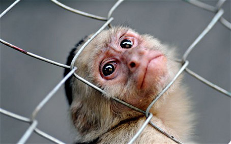 Ethics committee questions the Forcing a Monkey's Head Through a Chain Link Fence study