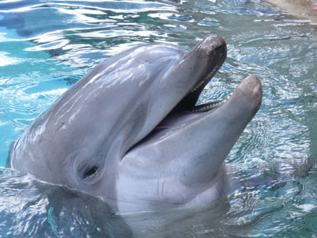 "Study: Dolphins Capable of ""Swearing Like Sailors"", ""Yeah, well, F^%$ You , human F^%$ers!!!"""