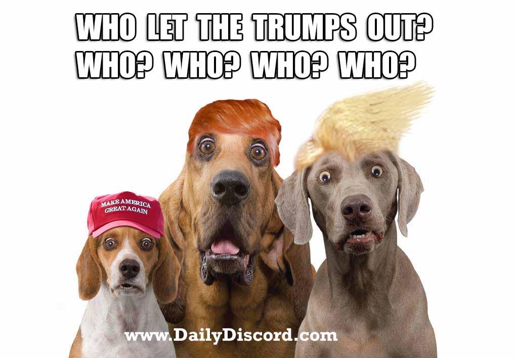 TrumpDog