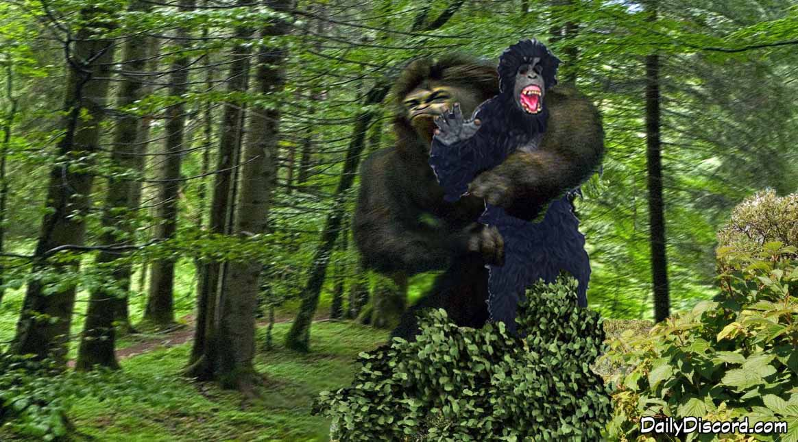 Man In Gorilla Suit Eaten By Sasquatch The Daily Discord
