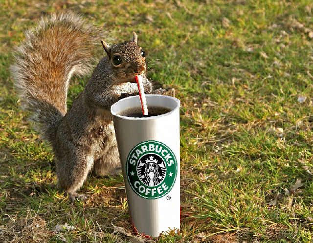 squirrel_coffee_by_grampy0729